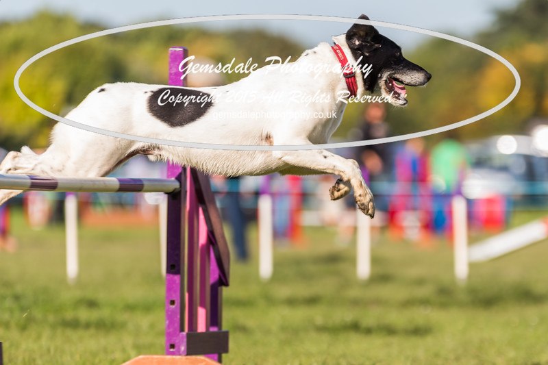 KC Southdowns Agility September 2015 -2011