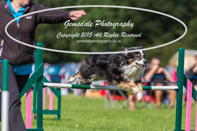 KC Southdowns Agility September 2015 -3024