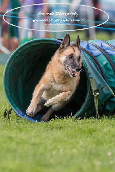 KC Southdowns Agility September 2015 -3036