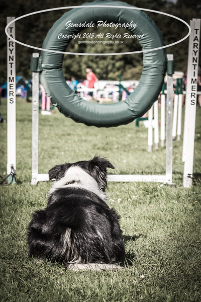 KC Southdowns Agility September 2015 -3014