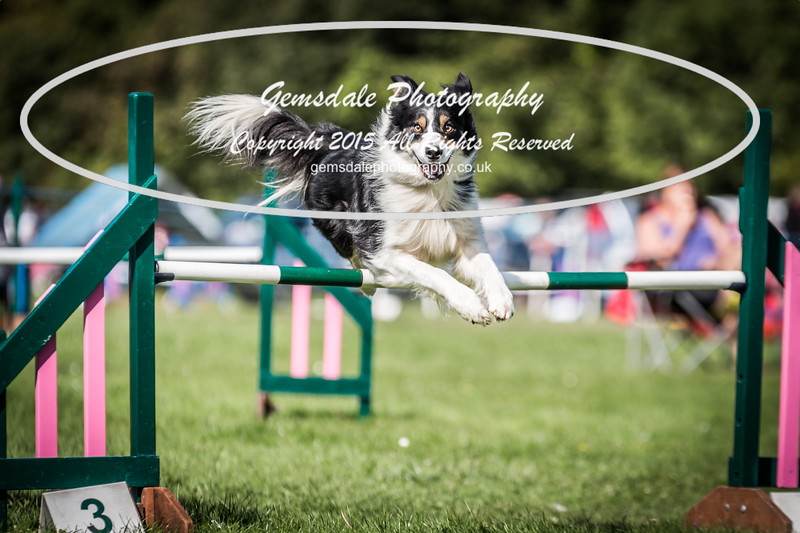 KC Southdowns Agility September 2015 -3015