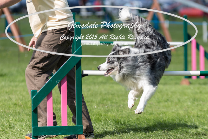 KC Southdowns Agility September 2015 -3012