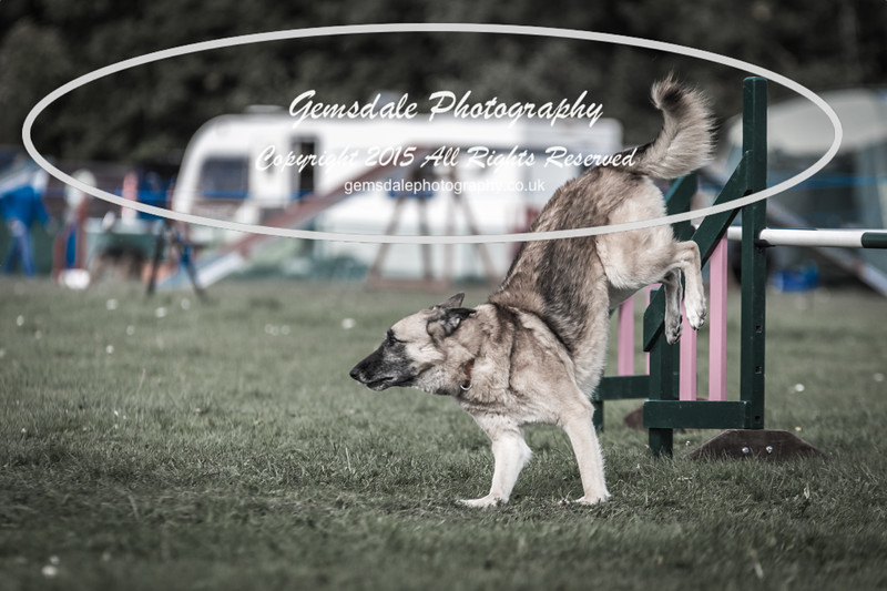 KC Southdowns Agility September 2015 -3035