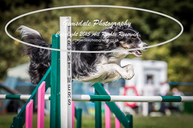 KC Southdowns Agility September 2015 -3041