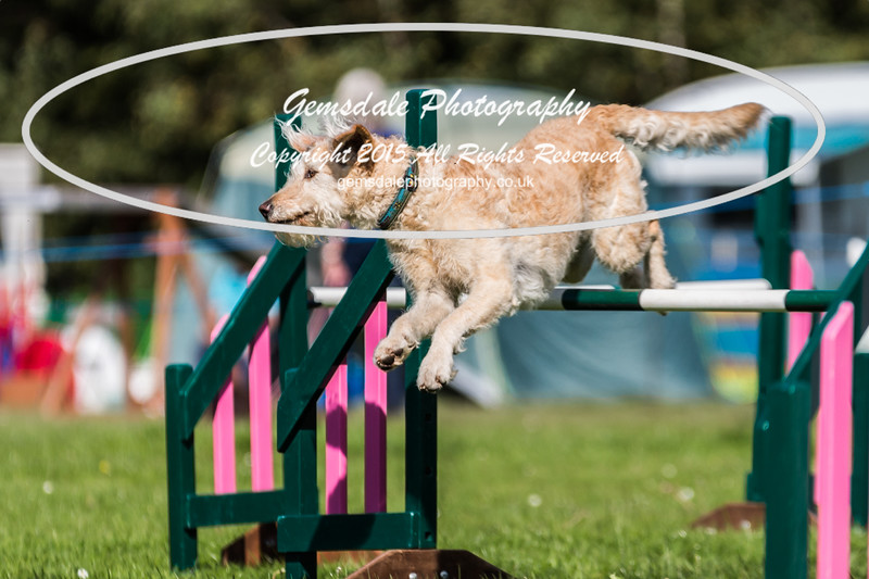 KC Southdowns Agility September 2015 -3005
