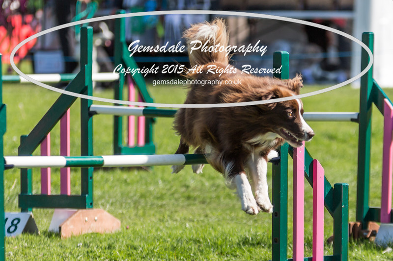 KC Southdowns Agility September 2015 -3000