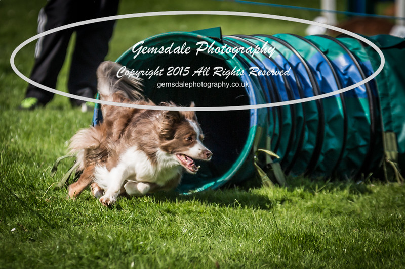 KC Southdowns Agility September 2015 -3002
