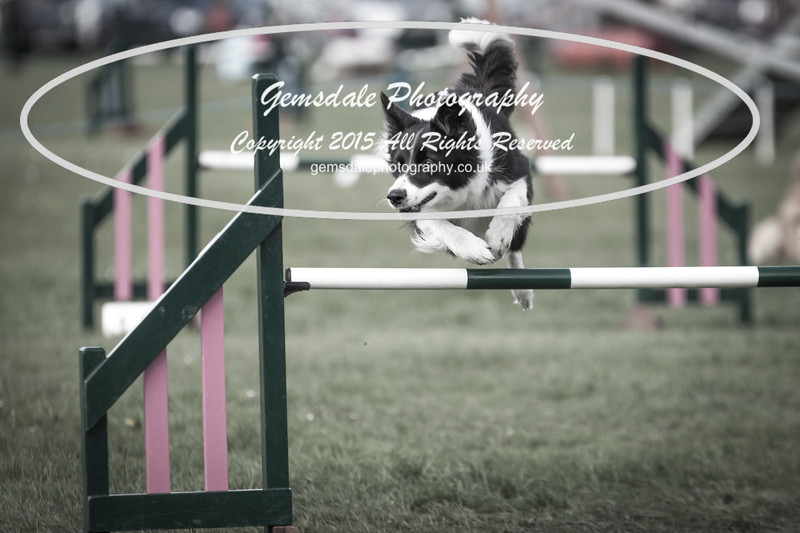 KC Southdowns Agility September 2015 -3032