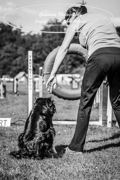 KC Southdowns Agility September 2015 -3019