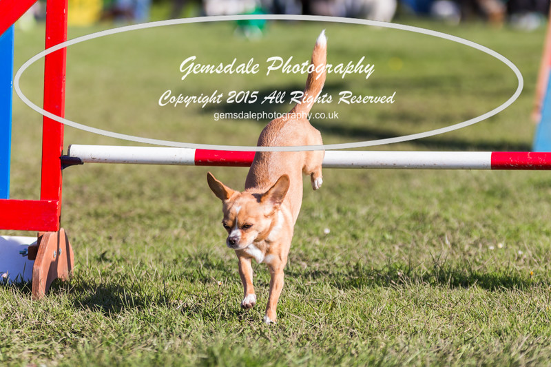 KC Southdowns Agility September 2015 -4026