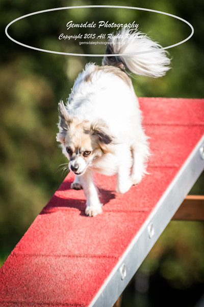 KC Southdowns Agility September 2015 -4009