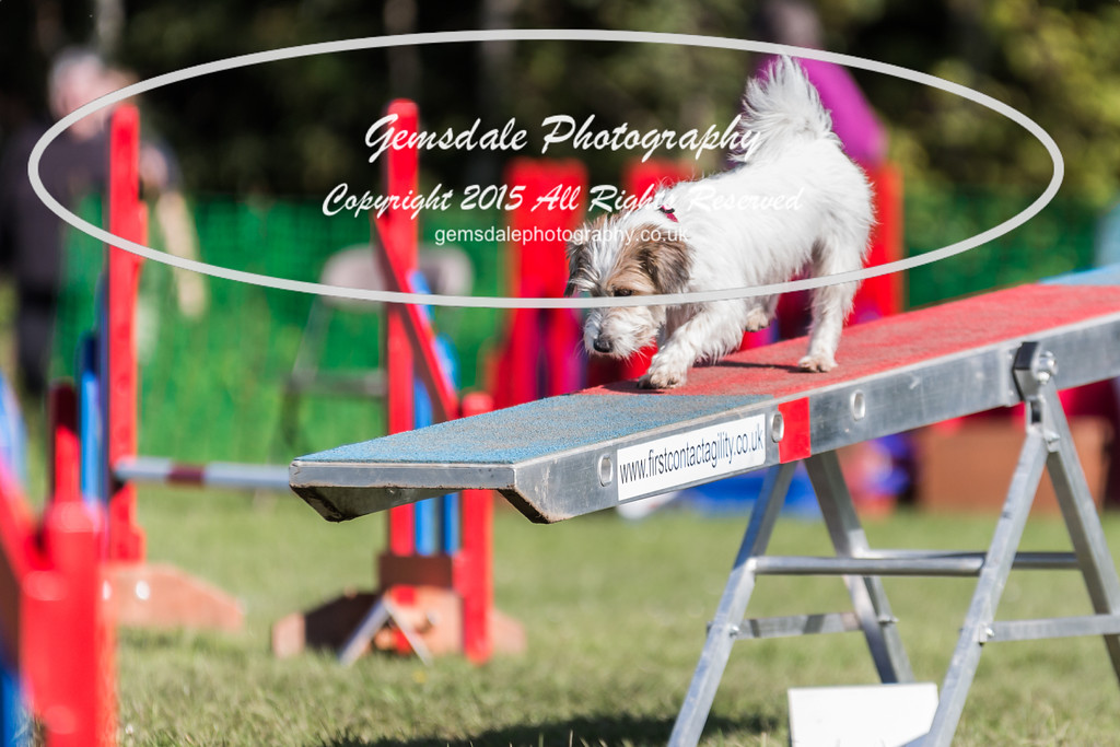 KC Southdowns Agility September 2015 -4023