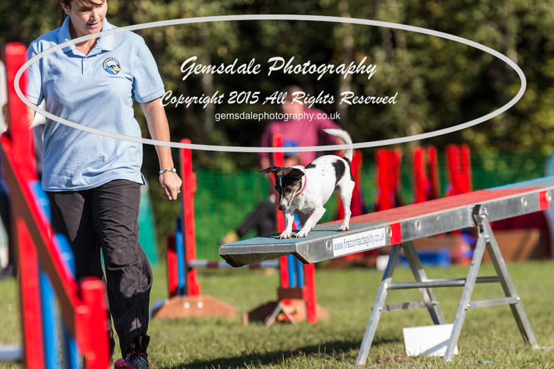 KC Southdowns Agility September 2015 -4002