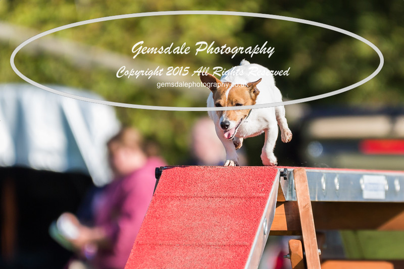 KC Southdowns Agility September 2015 -4041