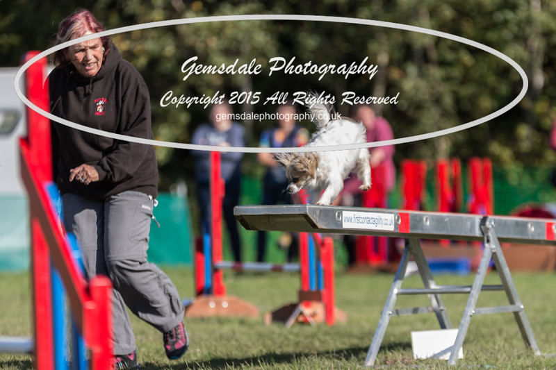 KC Southdowns Agility September 2015 -4010