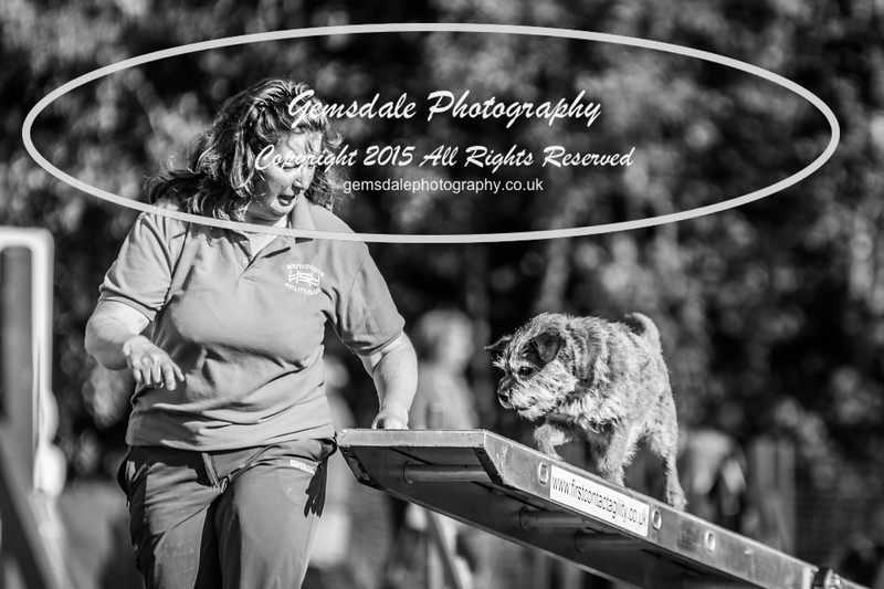 KC Southdowns Agility September 2015 -4034