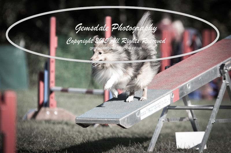 KC Southdowns Agility September 2015 -4040