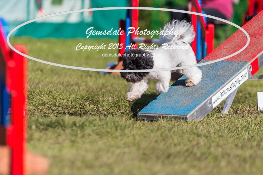 KC Southdowns Agility September 2015 -4018