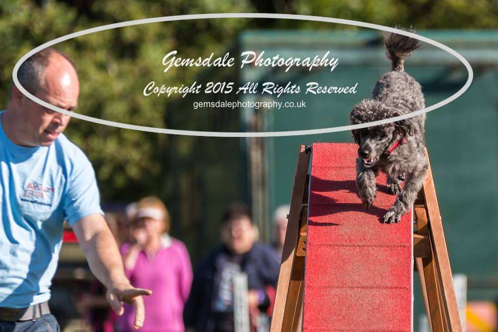 KC Southdowns Agility September 2015 -4011