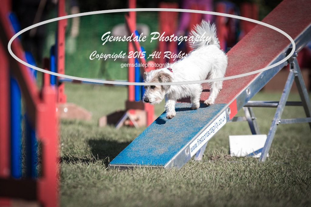 KC Southdowns Agility September 2015 -4025