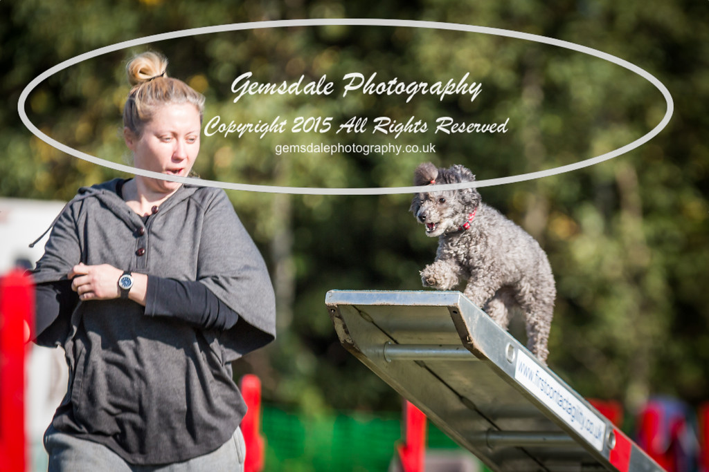 KC Southdowns Agility September 2015 -4045