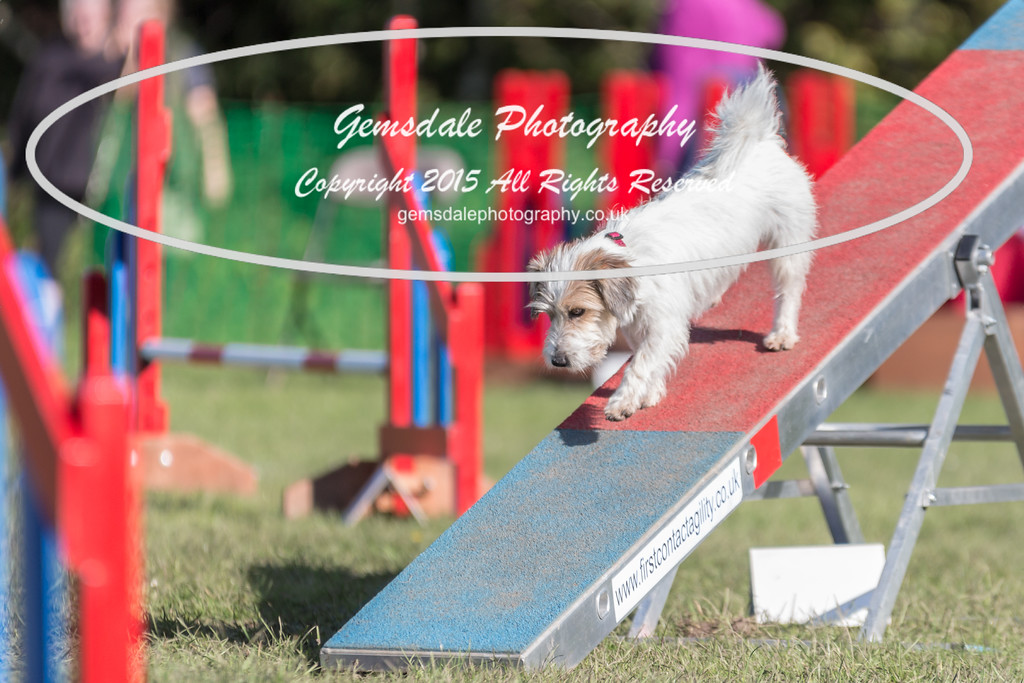 KC Southdowns Agility September 2015 -4024