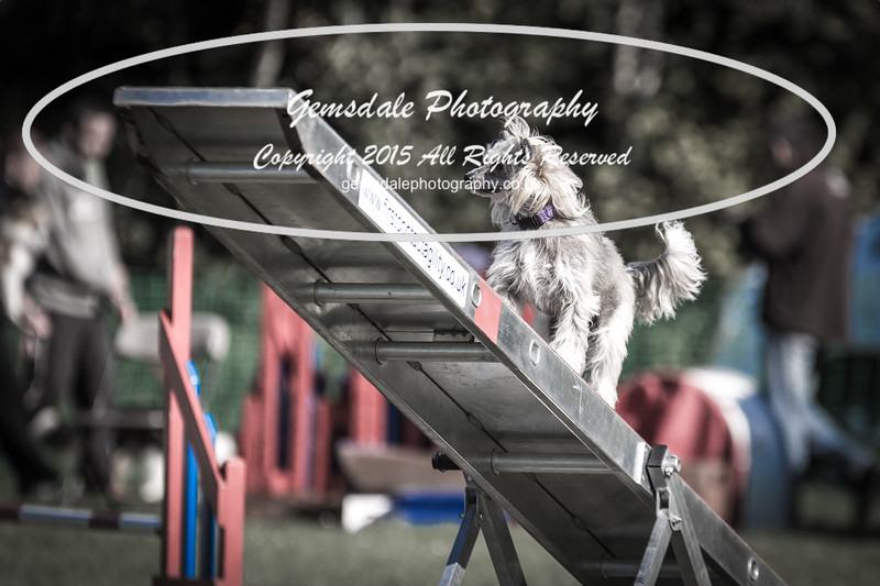 KC Southdowns Agility September 2015 -4058