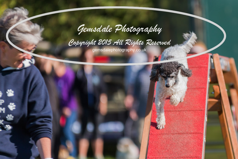 KC Southdowns Agility September 2015 -4014