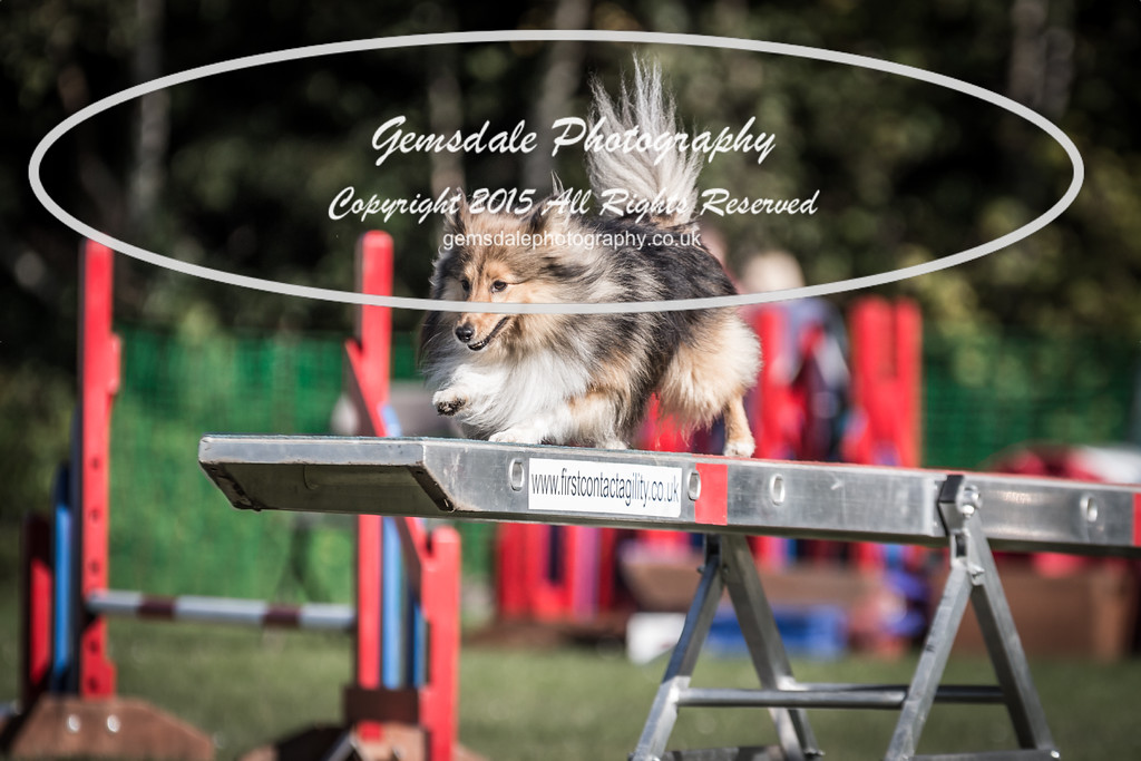 KC Southdowns Agility September 2015 -4039