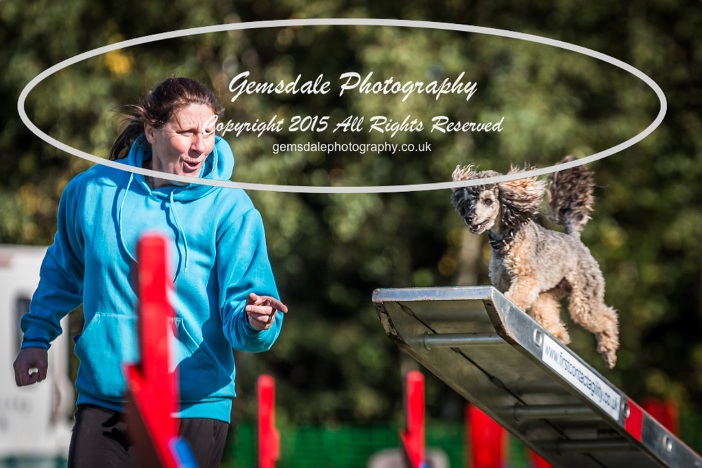 KC Southdowns Agility September 2015 -4036