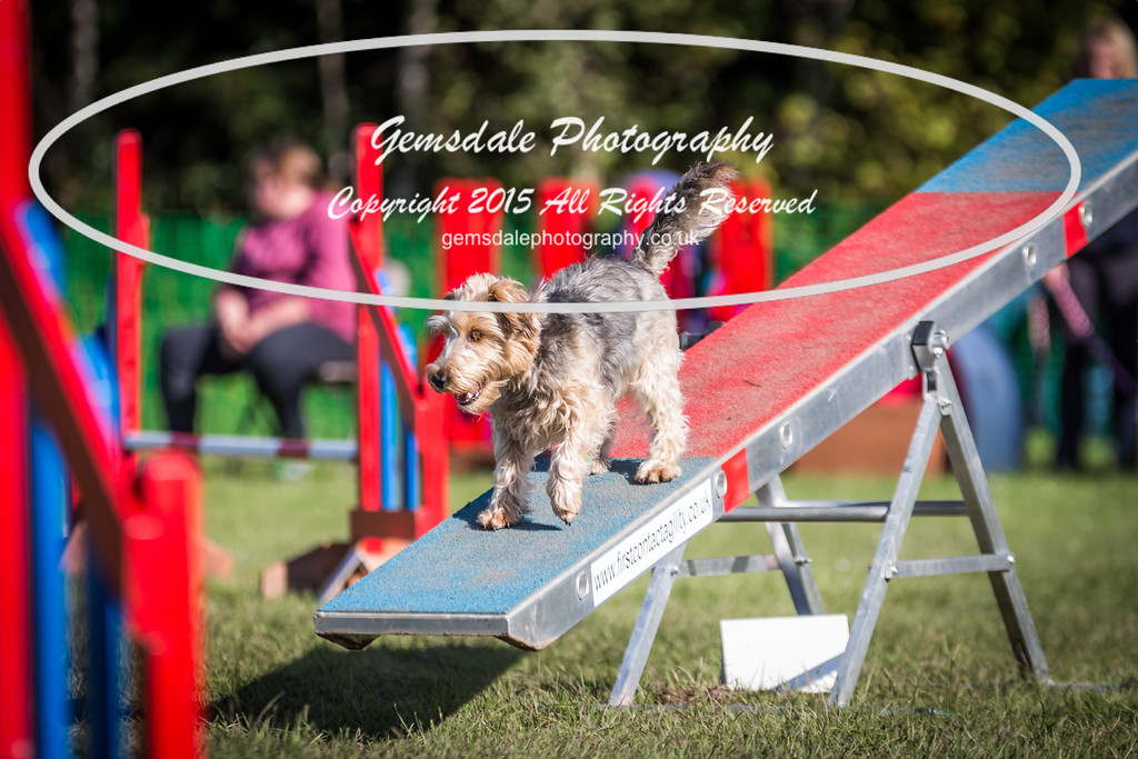 KC Southdowns Agility September 2015 -4020