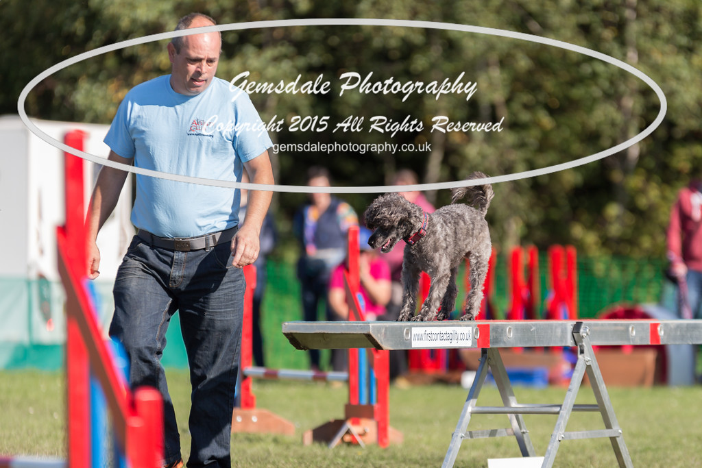 KC Southdowns Agility September 2015 -4013