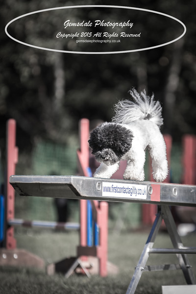 KC Southdowns Agility September 2015 -4017
