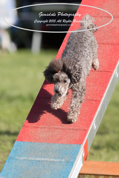 KC Southdowns Agility September 2015 -4044