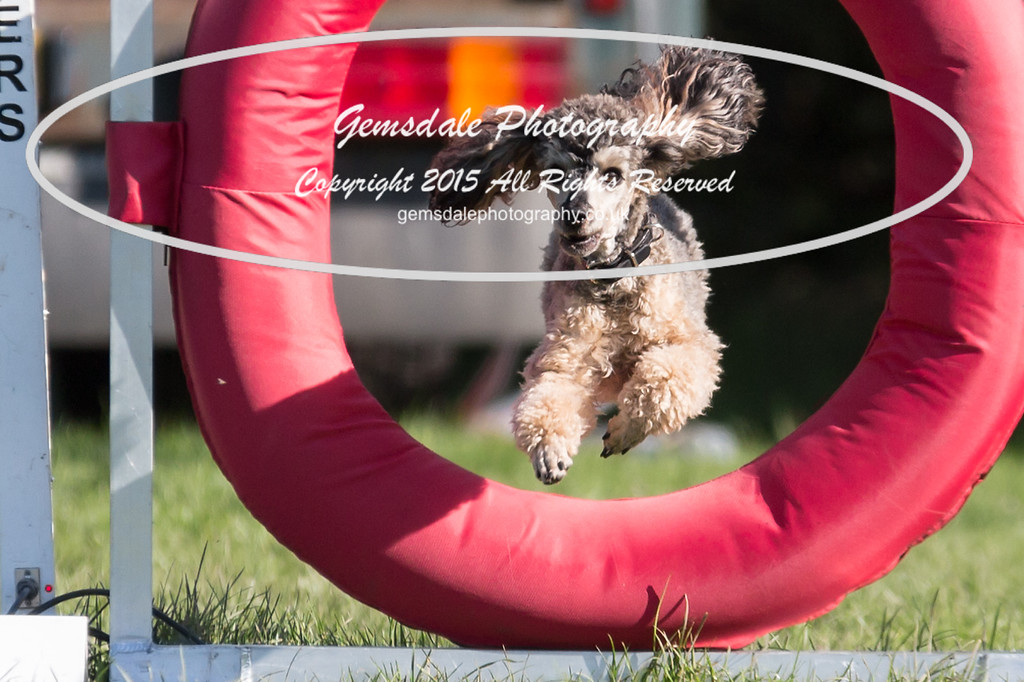 KC Southdowns Agility September 2015 -4035