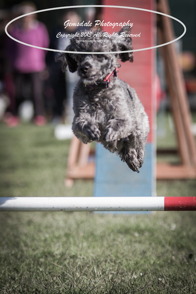 KC Southdowns Agility September 2015 -4012