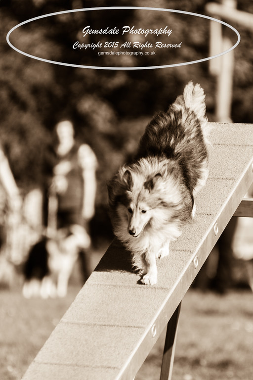 KC Southdowns Agility September 2015 -4037