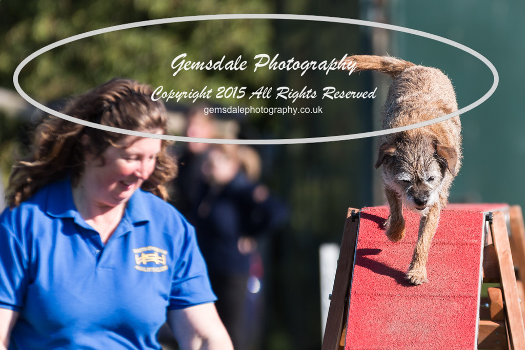 KC Southdowns Agility September 2015 -4031
