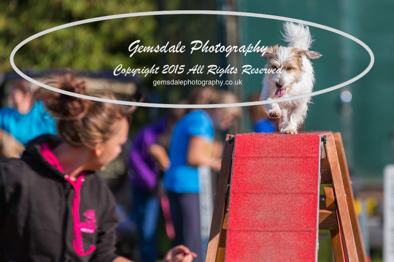 KC Southdowns Agility September 2015 -4021