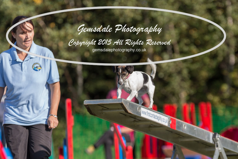 KC Southdowns Agility September 2015 -4001