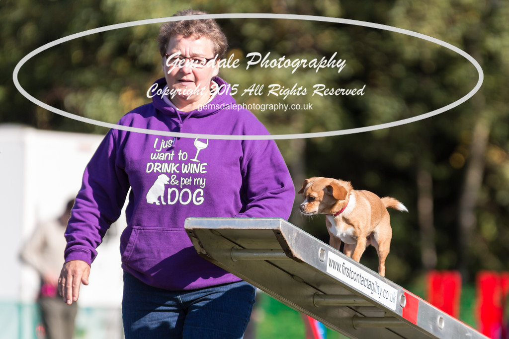 KC Southdowns Agility September 2015 -4027
