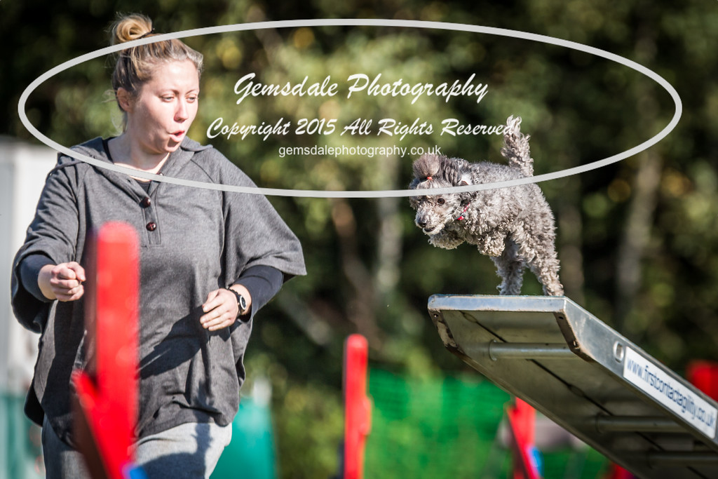 KC Southdowns Agility September 2015 -4046