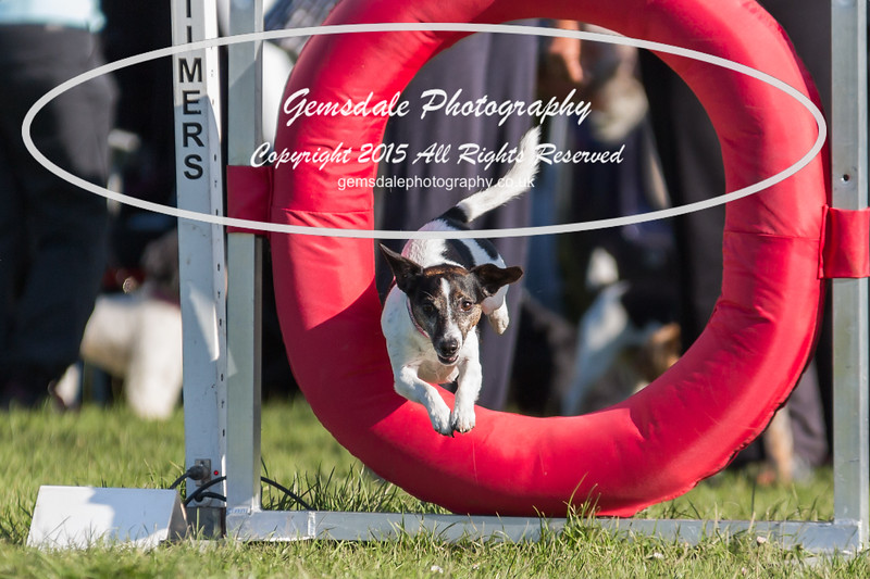 KC Southdowns Agility September 2015 -4000