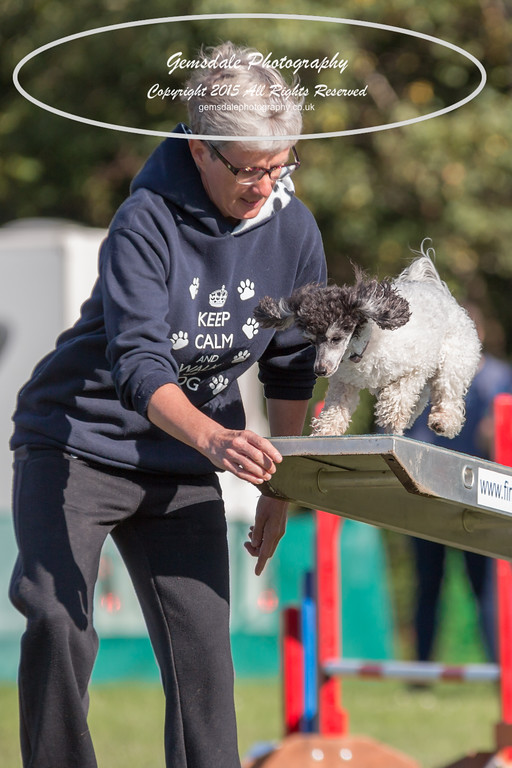 KC Southdowns Agility September 2015 -4015