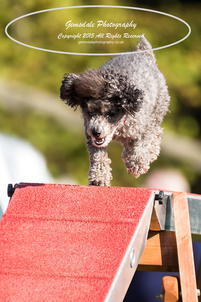 KC Southdowns Agility September 2015 -4043