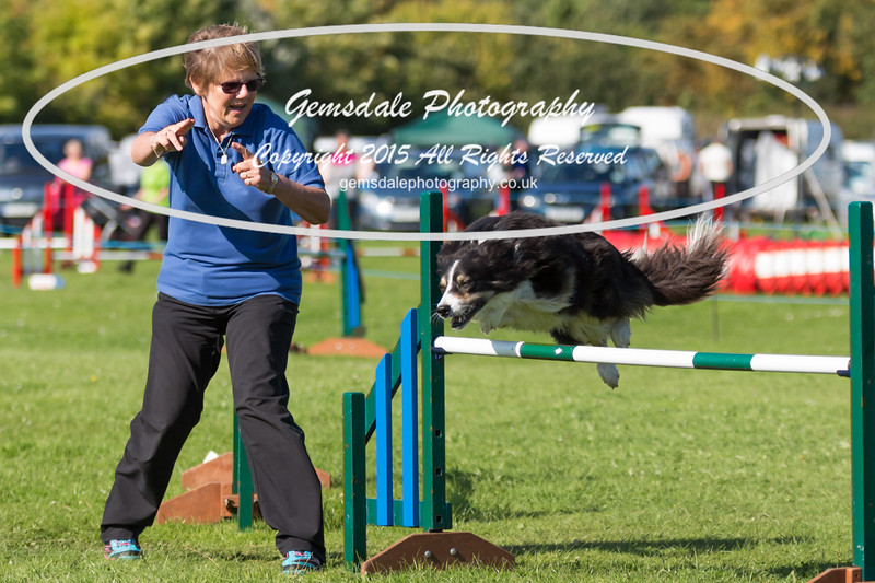KC Southdowns Agility September 2015 -8019