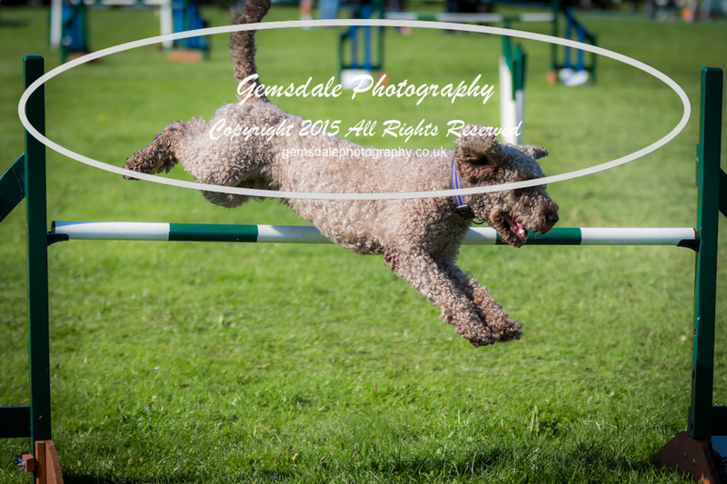 KC Southdowns Agility September 2015 -8031