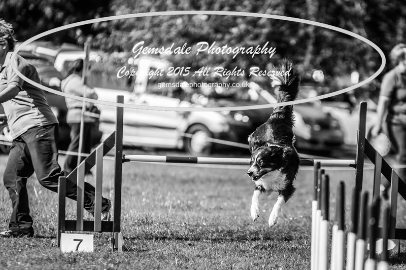 KC Southdowns Agility September 2015 -8020
