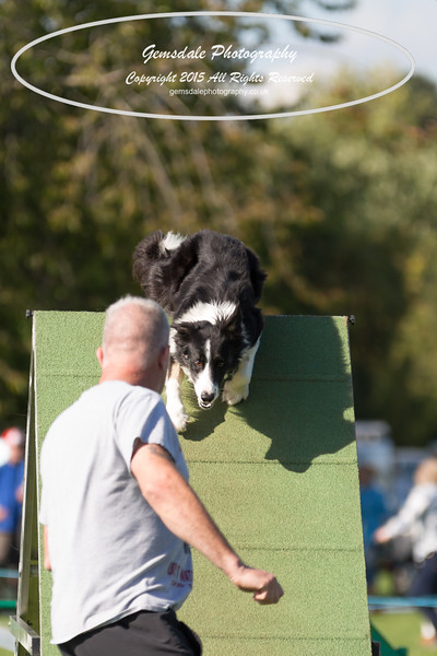 KC Southdowns Agility September 2015 -8025