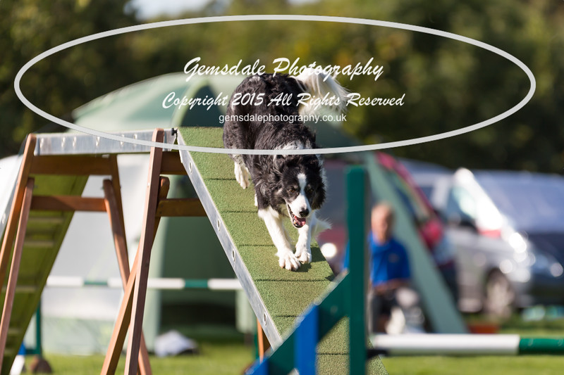 KC Southdowns Agility September 2015 -8009